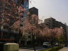 ワイガーデンのブログ-桜2