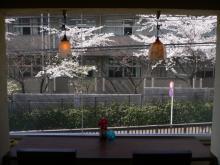 ワイガーデンのブログ-桜