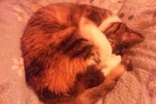 ワイガーデンのブログ-ネコ